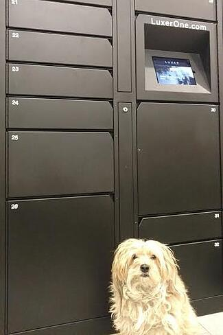 dog-lockers.jpg